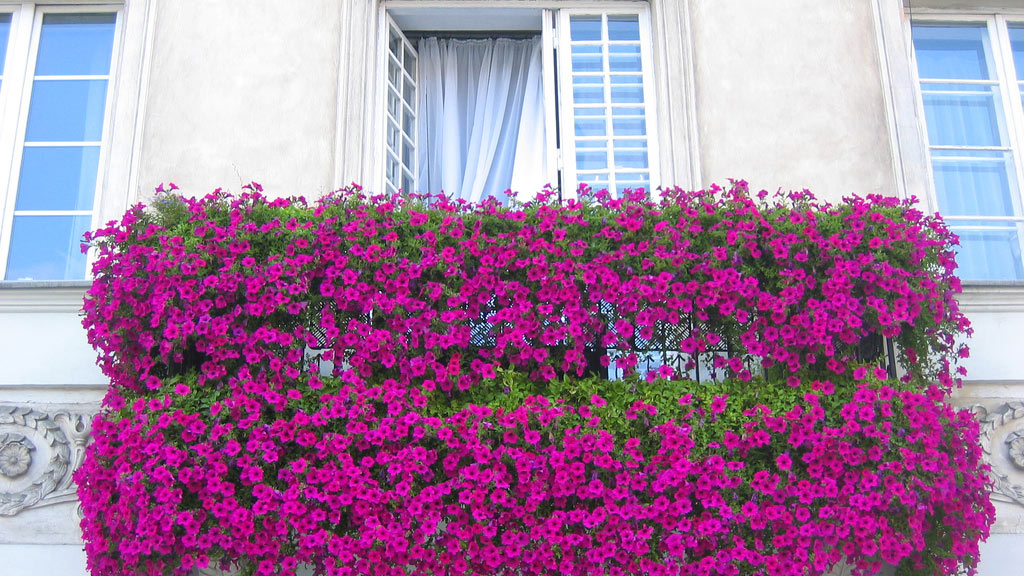 C mo elegir las plantas para el balc n flores y plantas for Plantas en balcones y terrazas