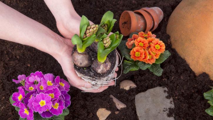 Cómo trasplantar plantas de interior - Cuidados - Blog. Flor & Flora ...