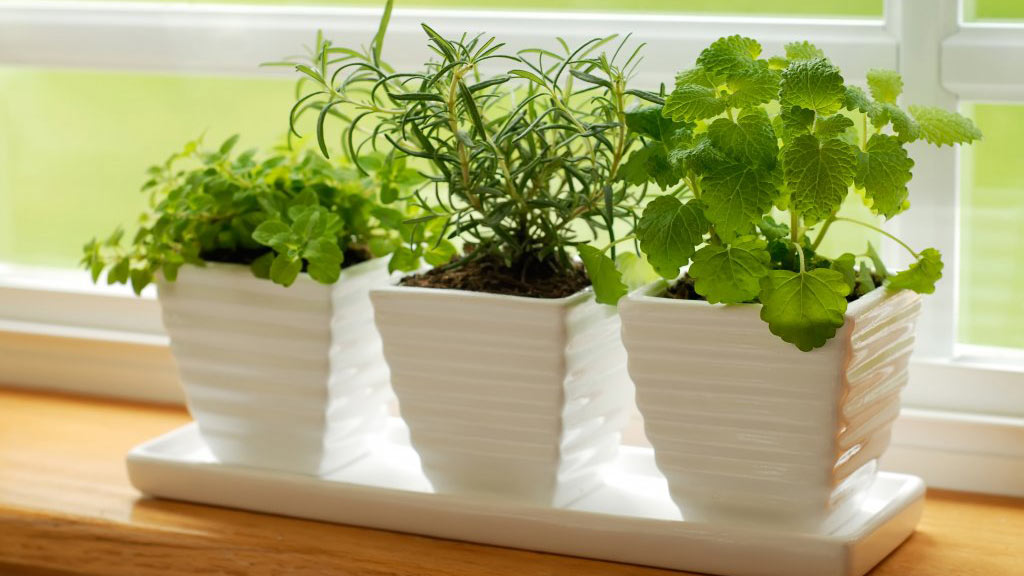 Consejos básicos para el cuidado de las plantas de interior ...