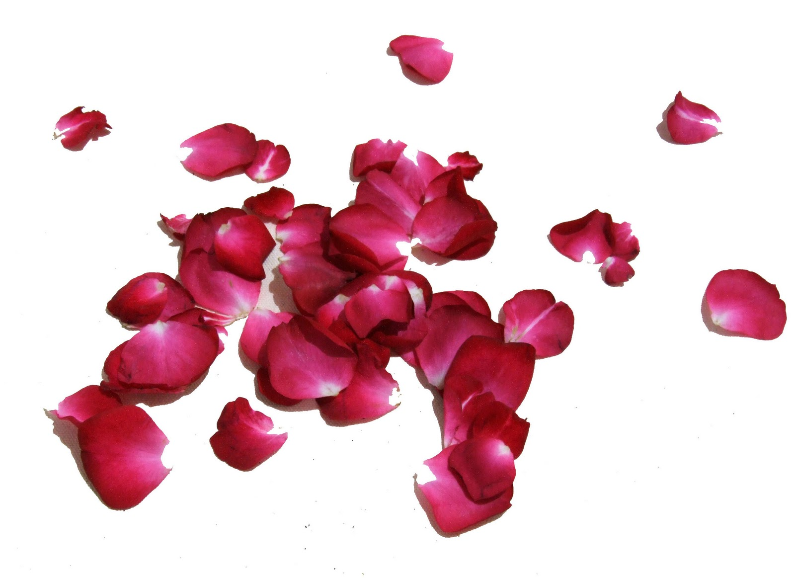 Pétalos De Rosa Complementos Complementos En León Flor Flora
