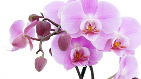 10 Motivos para tener plantas en casa 10 Motivos para tener plantas en casa_15827-flower-photo