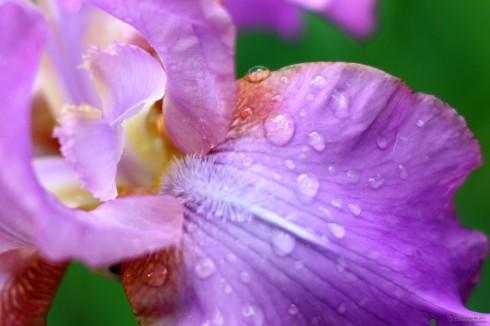 Cuidado de las orquídeas - La humedad Cuidado de las orquídeas