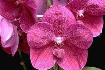 Cuidado de las orquídeas - Temperatura y ventilación Cuidado de las orquídeas - Temperatura y ventilación