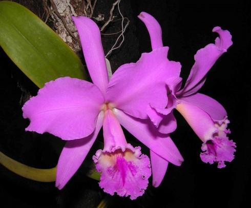Cuidados de las orquídeas - La luz Cuidados de las orquídeas - La luz