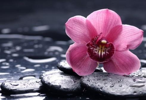 Cuidados para las orquídeas - El agua Orquídea
