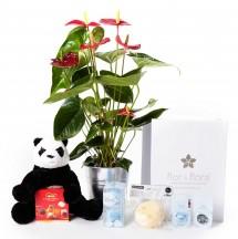 Anthurium y caja regalo plus azul + regalos