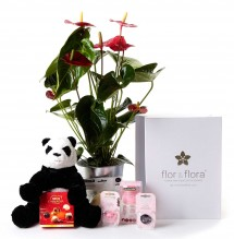 Anthurium y caja regalo plus rosa + regalos