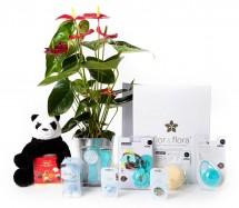 Anthurium y caja regalo total azul + regalos