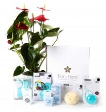Anthurium y caja regalo total azul