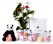 Anthurium y caja regalo total rosa + regalos