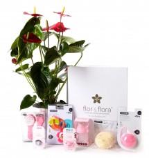 Anthurium y caja regalo total rosa