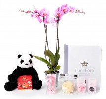 Orquidea 2 varas y caja regalo plus rosa + regalos