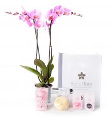 Orquidea 2 varas y caja regalo plus rosa