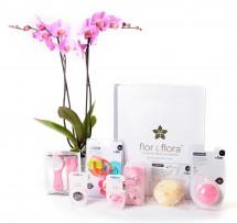 Orquidea 2 varas y caja regalo total rosa
