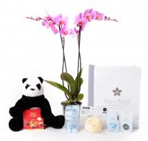 Orquidea 2 varas y caja regalo plus azul + regalos
