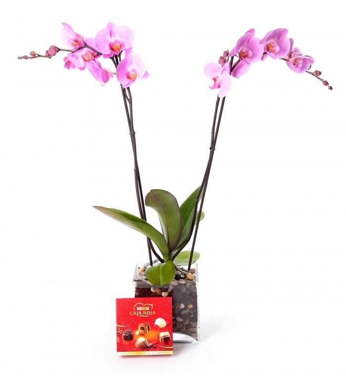 Planta orquidea de 2 varas_orquidea-con-jarron-cristal